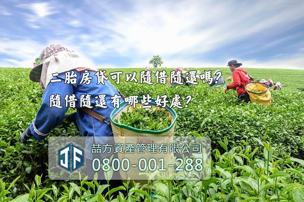 台灣茶農採採收茶葉